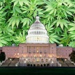 washington-dc-marijuana