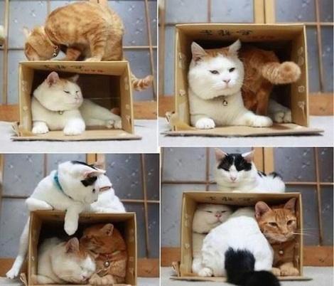 a.baa-Box-Sitting-Gentrification