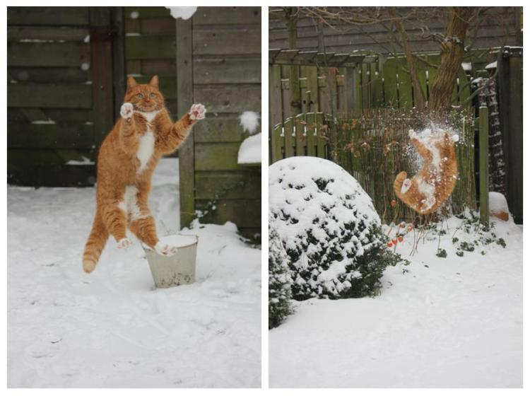 cat-takes-snowball-in-the-face