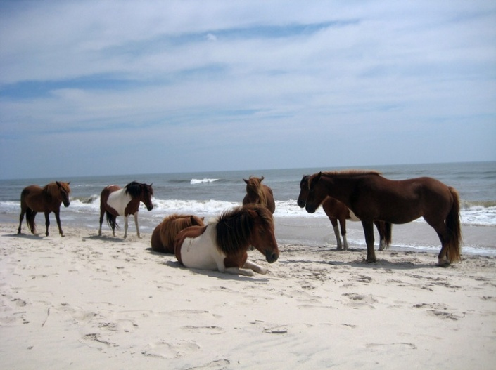 Assateague Island Horse Family Poses