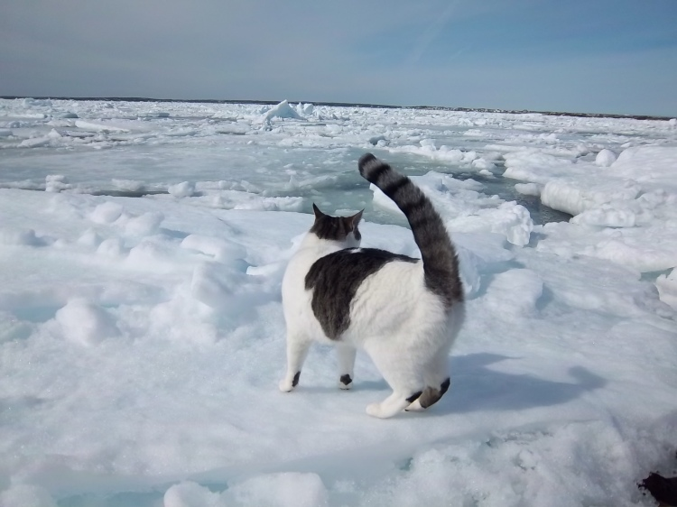 cats-on-ice-7