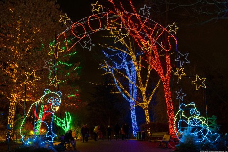Image result for zoolights dc