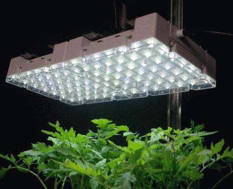 fluorescent-grow-light