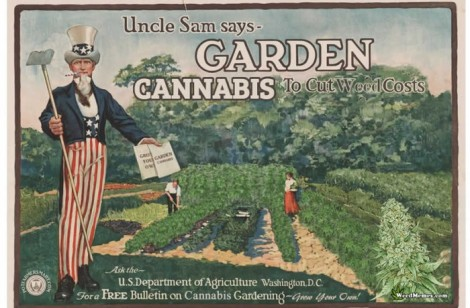 uncle-sam-garden-cannabis-weed-memes-700x460