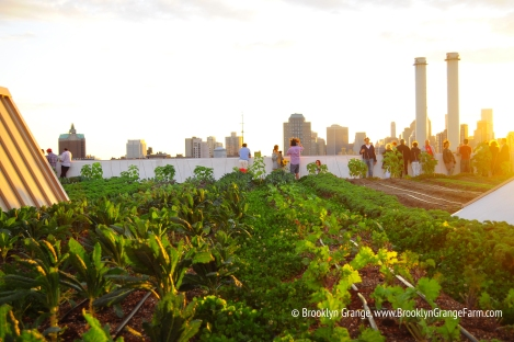 an+evening+event+at+the+Brooklyn+Navy+Yard+farm