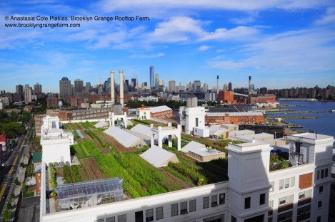 Brooklyn+Navy+Yard+Farm